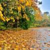 De luni se schimbă vremea - Prognoză meteo noiembrie