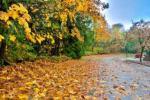 prognoza-meteo-luna-noiembrie