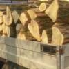 Transport de lemne, cu iz penal. Mai mulți metri cubi de material lemnos confiscat de poliţişti