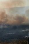 Pompierii dorohoieni în alertă! Zeci de hectare de vegetație distruse de mai multe incendii - FOTO