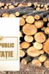 ANUNȚ: Liceul Anastasie Bașotă Pomârla organizează licitație pentru vânzare de masă lemnoasă