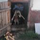 Misiune neobișnuită a jandarmilor! Dulău salvat din beci - FOTO