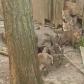 Misiune inedită pentru jandarmi: Casă părăsită invadată de vulpi - VIDEO