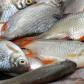 Aproape 80 de kilograme de pește confiscate de polițiști