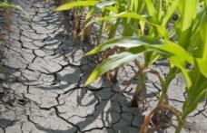 Ponta: Guvernul va acorda despăgubiri pentru terenurile afectate de secetă