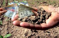 Anunț important! Se începe plata despăgubirilor pentru secetă. La nivelul județului Botoșani au fost depuse aproximativ 9000 de cereri