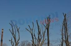 """Primim la redacţie - """"Opriţi măcelărirea copacilor din Dorohoi !"""" - FOTO"""