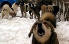 Primim la redacţie - Eterna poveste... câinii comunitari