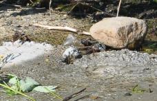 Primim la redacție - Cititorii din Dorohoi ne informează: Curge apa!