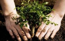 """Primăria Dorohoi vă invită la tradiționala campanie de plantare de pomi sub sloganul """"Te iubesc Dorohoi"""""""