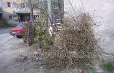 Primim la redacție – Vreascuri și gunoi la întâmplare în Cartierul Plevna din Dorohoi - FOTO
