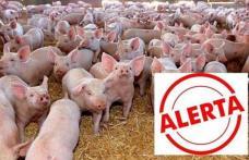Alertă maximă în tot judeţul Botoșani din cauza pestei porcine africane