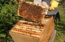 Apicultorii falsifică mierea punând zahăr în stup. Ce măsuri ia ministrul Agriculturii
