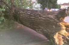 Copaci rupţi şi acoperişuri smulse de vânt! Furtuna care a ocolit Dorohoiul s-a dezlănțuit la Săveni!