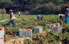 AJOFM anunță că sunt disponibile 800 locuri de muncă sezoniere în agricultură - SPANIA