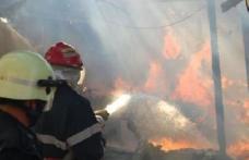 Zece tone de furaje distruse din joacă de un băiețel de 4 ani