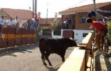 O fetiţă româncă a fost rănită grav de un taur scăpat de sub control