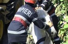 Cal salvat de pompieri dintr-un canal