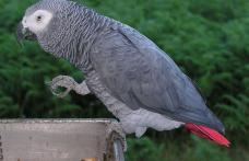 Cea mai inteligentă pasăre de pe Pământ
