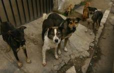 O problemă care persistă în Dorohoi - Câinii comunitari