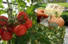 Ajutoare financiare consistente pentru cultivatorilor de roşii din judeţ