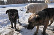 Primim la redacție – Probleme create de câinii comunitari într-o zonă centrală din Dorohoi