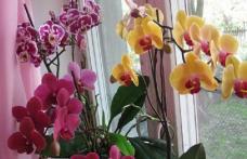 Secretul orhideelor: Iată ce trebuie să faci ca să inflorească tot anul