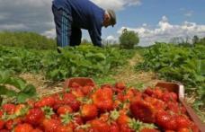 200 de locuri de muncă în agricultură, în Spania. Salariu până la 2300 de euro!