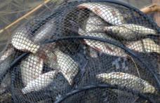 Percheziţii la domiciliile unor botoșăneni suspectaţi de braconaj piscicol