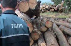 Acțiuni ale polițiștilor botoșăneni pentru combaterea ilegalităților din domeniul silvic!