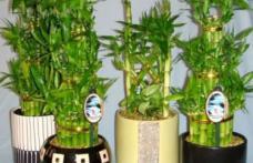 Aceste plante atrag banii şi prosperitatea în casă