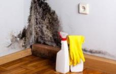 Cum scapi de mucegaiul din casă în mod natural şi pentru totdeauna!