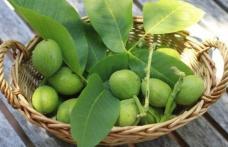 Beneficiile neştiute ale nucilor verzi. Sunt aur pentru organism şi vindecă multiple afecţiuni