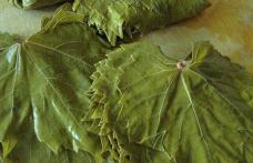 Frunzele de viță de vie, alegerea perfectă pentru persoanele care suferă de varice și nu numai