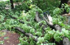 Victime și pagube materiale produse de furtuna de sâmbătă după-amiază