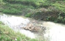 Râul Jijia nu a fost decolmatat