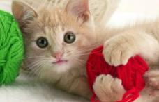 De ce e bine să ai în casă o pisică