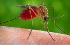 Te-a muşcat un ţânţar? Iată ce trebuie să faci pentru a scăpa de mâncărime. E simplu!
