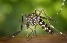 Ce NU trebuie să faci când te ciupește o insectă