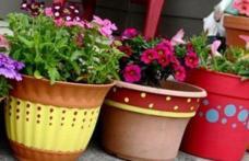 Ce se întâmplă dacă uzi florile cu suc acidulat. Trucul de care te vei folosi de acum înainte