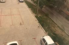 Primim la redacție – În Cartierul Plevna câinii comunitari sunt la ei acasă... - FOTO