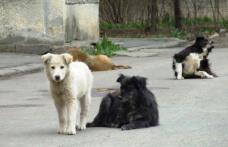 Primim la redacție – Câinii o problemă și pe Aleea Amurgului din Dorohoi