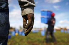 Nou caz de sclavie cu români în Italia