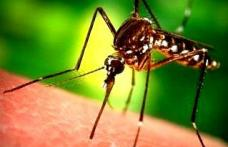Lucruri pe care nu le ştiai despre ţânţari. Pe cine muşcă ţânţarii şi pe cine nu?