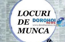 AJOFM Botoșani: Aproape șapte sute de locuri de muncă disponibile în județ!