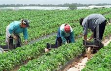 200 locuri de muncă în agricultură prin rețeaua EURES