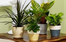 Plante care pot purifica aerul din casă
