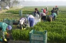 Selecție pentru locurile de muncă din domeniul agricol – SPANIA