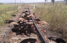 Imagini șocante: Trenul Iaşi-Dorohoi a deraiat, după ce a intrat în plin într-o turmă de oi