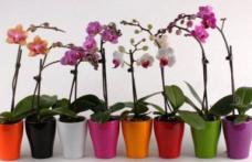 Cât de des se udă, de fapt, orhideea. Trucuri pentru o înflorire rapidă